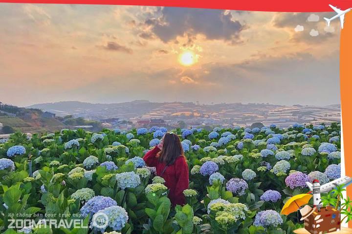 Vườn hoa cẩm tú cầu tour Đà Lạt